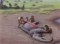 Human and hyenas fought over carrion during the Pleistocene
